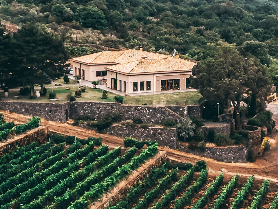 Drone Taking Wine Marketing Photo From Above Vineyard