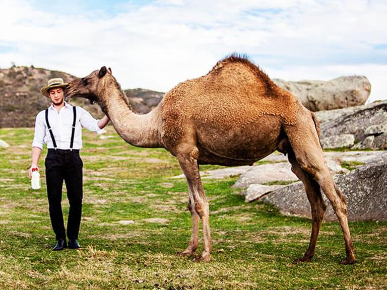 Camel Milk Advertisement Featuring Man Standing Next To Camel